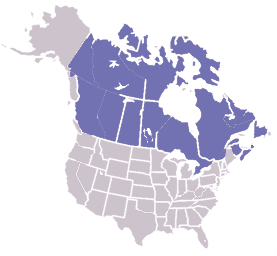 Retailers in Canada & the USA